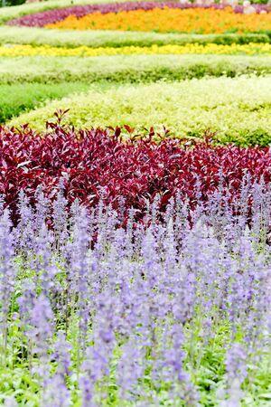 flower garden: blooming seasonal flowers