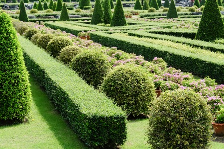 flower garden path: Garden path with topiary landscape Stock Photo