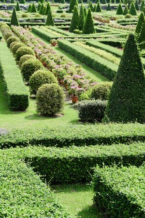 formal garden: Topiary in an English Formal Garden