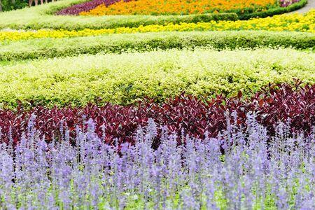 flower garden path: Landscaped flower garden Stock Photo