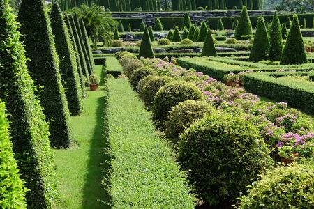 front  or back  yard: Topiary in an English Formal Garden
