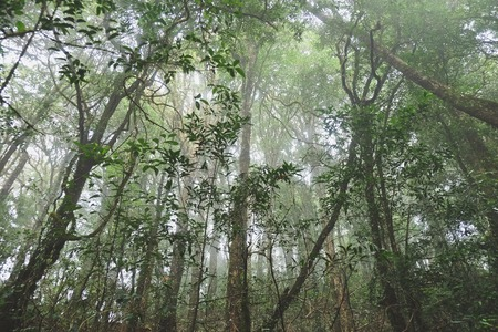 national forests: The forests are abundant, Many kinds of trees in Kew Mae Pan Nature Trail, Doi Inthanon National Park, the highest point in Thailand