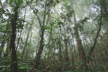 The forests are abundant, Many kinds of trees in Kew Mae Pan Nature Trail, Doi Inthanon National Park, the highest point in Thailand