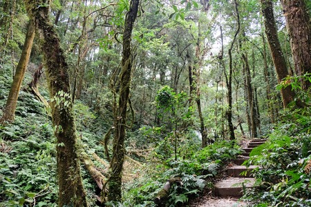 plentifully: The forests are abundant, Many kinds of trees in Kew Mae Pan Nature Trail, Doi Inthanon National Park, the highest point in Thailand