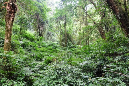 pan tropical: Tropical forest in thailand,The forests are abundant, Many kinds of trees in Kew Mae Pan Nature Trail, Doi Inthanon National Park, the highest point in Thailand