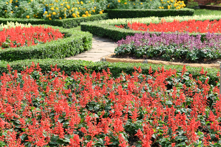 ornamental garden: Garden path with topiary landscape,English Formal Garden