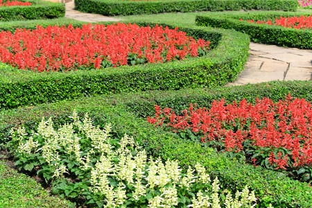 topiary: Garden path with topiary landscape,English Formal Garden