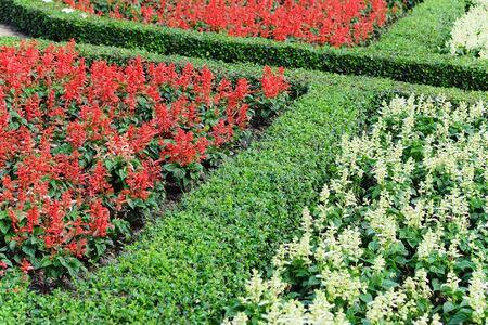 flower garden path: Topiary in an English Formal Garden