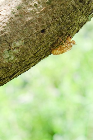 molting: Insect molting on tree Stock Photo