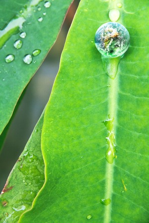conservative: abstract image of small world in nature, Environment Conservative concept Stock Photo