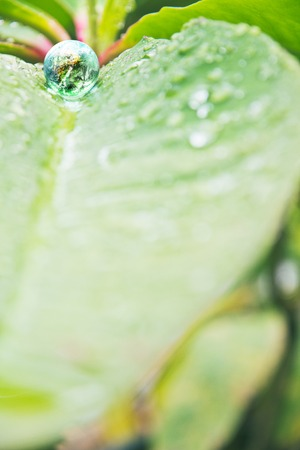 small world: abstract image of small world in nature, Environment Conservative concept Stock Photo