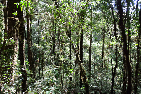 pan tropical: Tropical forest,The forests are abundant, Many kinds of trees in Kew Mae Pan Nature Trail, Doi Inthanon National Park, the highest point in Thailand
