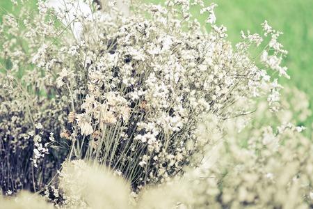 Bouquet of flowers, Gypsophila