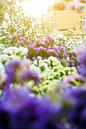 Bouquet of colorful flowers, Gypsophila