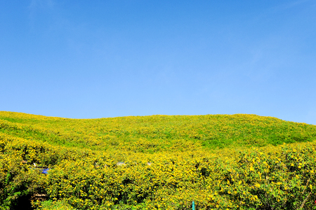 Thung Bua Tong flowers Doi Mae Yuam, Tree Marigold will bloom simultaneously. During November to December every year, Mae Hong Son Province, Thailand