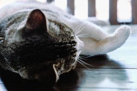 Image of Kitten sleeping