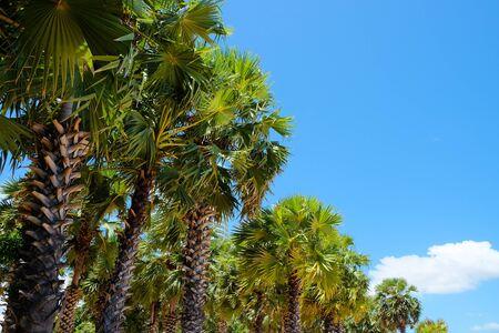 Palm trees against a beautiful blue sky