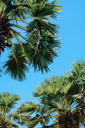 Palm trees against a beautiful blue sky