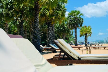 Lounge chairs and palm trees at the beach 版權商用圖片
