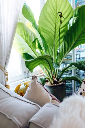 Big green leafs in elegant living room interior, Living room decorated with trees