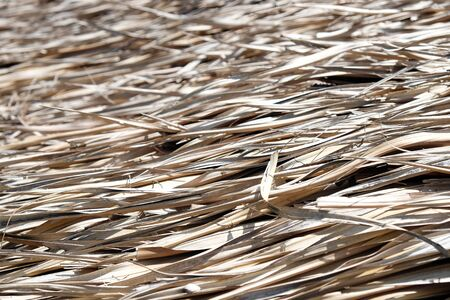 Detail of Thatch straw roof background