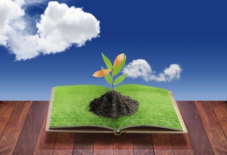 denker: Open 3D-boek met boom op groen gras veld en gebogen, conceptueel idee