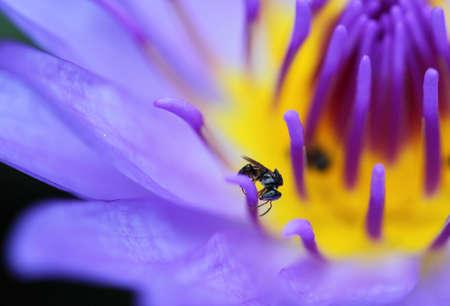insect  macro on lotus leaf  photo