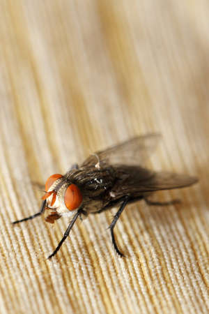insect fly macro on curtain photo