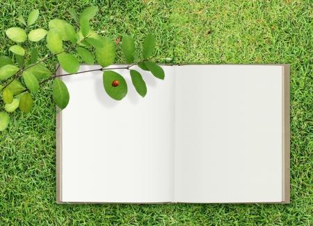 Open  book on grass photo