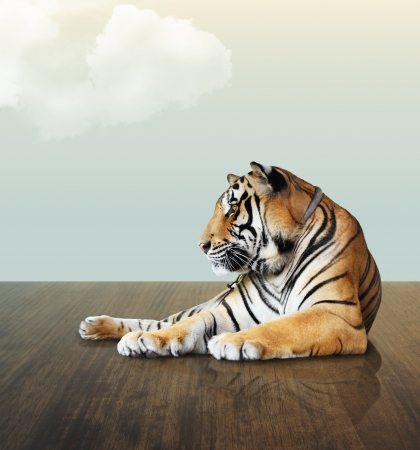 tiger under the sky with cloud on wood floor photo