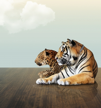 Leopard and tiger  under the sky with cloud on wood floor photo