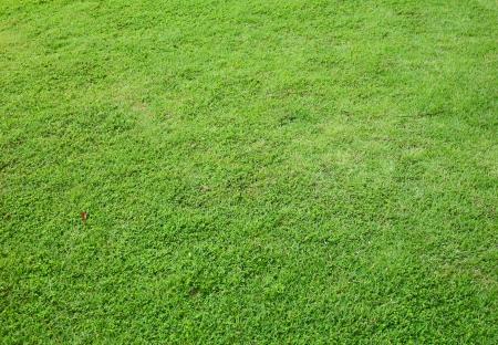 asia Green grass background  photo