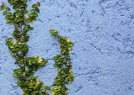 closeup plant on Abstract rough wall background photo