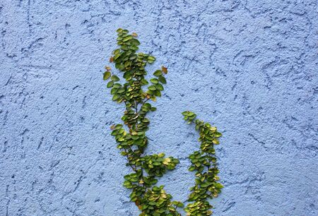 plant on Abstract rough wall background photo