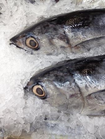 Fresh fish on ice in the market. Stock Photo - 20625349