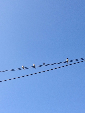 Birds on power line. Stock Photo - 20625178