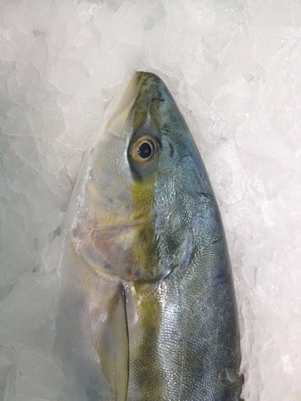 Fresh fish on ice in the market. Stock Photo - 20625196