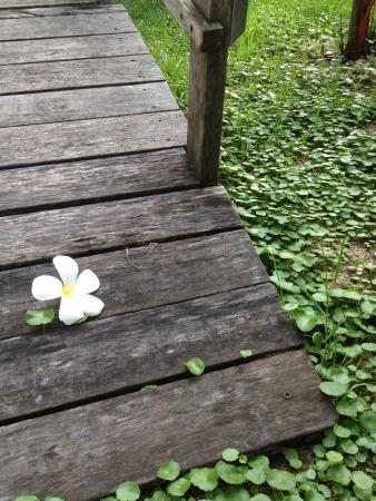 Flower on the brigde Stock Photo - 20625367