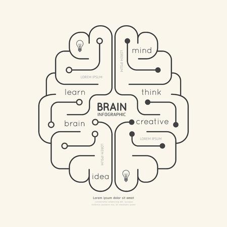 cerebro: Ilustraci�n lineal plana Infograf�a Educaci�n Concept.Vector Cerebro Esquema.