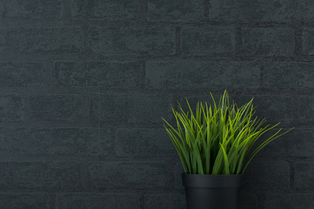 Grass on the black wall Stock Photo