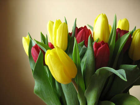 Tulips in red and yellow with a peach background.