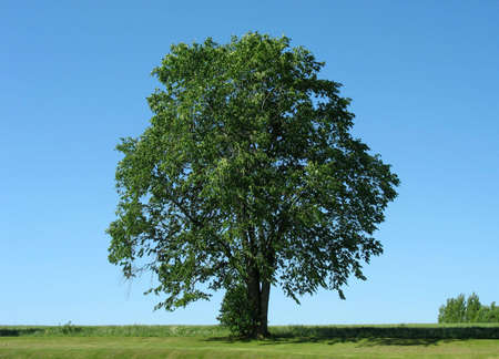 Beautiful tree with clear sky as background. Stock Photo