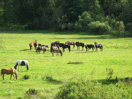 gelding: Horses of all sorts on a field  Stock Photo