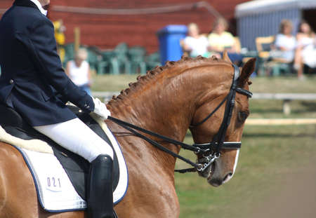 rein: Dressage with beautiful brown horse and rider Stock Photo