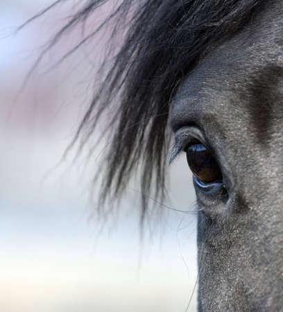 Beautiful horse eye in close-up photo