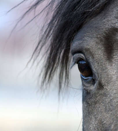 Beautiful horse eye in close-up