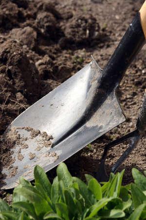 Spade at work in a garden