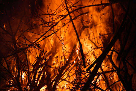 Huge Fire in the forest or jungle