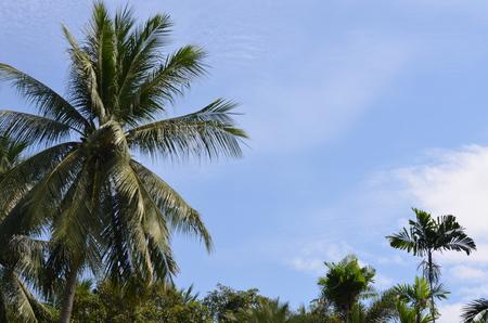 Nong Nooch Garden Pattaya