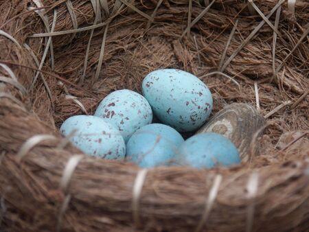 blue speckled eggs in nest basket